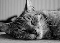 Med bioresonanco lahko zaspim